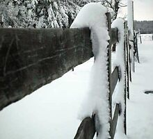 Snow on the fence by leaningpines