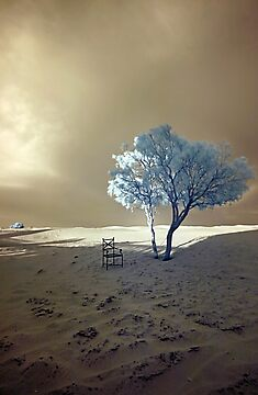 Lone Tree and Chair - Moroccan Sahara by Debbie Pinard