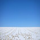 Snow In Corn Field by Lisa Diamond