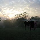 Clothesline At Sunrise by Lisa Diamond