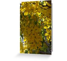 Nature's Curtain - Cortina De La Naturaleza Greeting Card