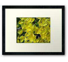Flower And Fly - Flor Y Mosca Framed Print