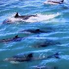 Multiple Dolphins by Laurie Puglia