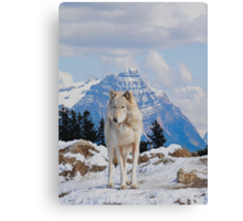 White Grey Wolf & Rocky Mountains Art  Canvas Print