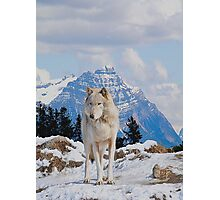 White Grey Wolf & Rocky Mountains Art  Photographic Print