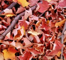 Autumn Leaves 1 Sticker