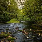 Lake Creek #4434 by Charles & Patricia   Harkins ~ Picture Oregon