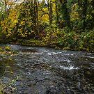 Lake Creek #445RTF by Charles & Patricia   Harkins ~ Picture Oregon