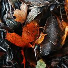 Rusty Leaf and Frost by timkirman