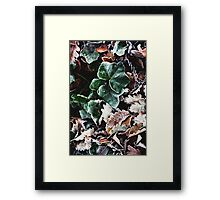Green Frosty Leaf Framed Print