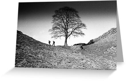 Walkers at Sycamore Gap, Hadrian's Wall, Northumberland by Iain MacLean