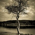 The Tree by Brian Kerr