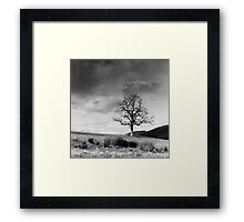 Tree from Lindinny Woods/Southern Upland Way, Scottish Borders Framed Print