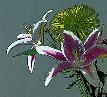 Lilly by DDowning