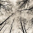 Bare Branches, Wide Angle, Lindinny Woods, Scottish Borders by Iain MacLean