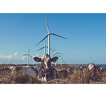 Cow & Wind Power Photographic Print