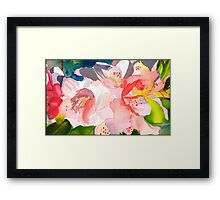 Rhododendron in Peach Framed Print