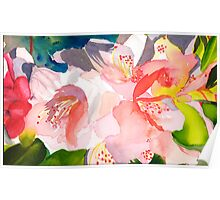 Rhododendron in Peach Poster