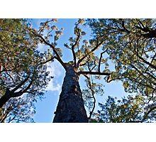 Tree Tops Photographic Print