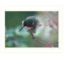hummingbird perching Art Print