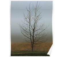 Lone Tree with Birds Poster
