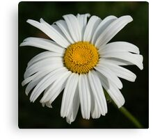 Just a Daisy - Simply Beautiful Canvas Print