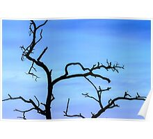 Lone Tree at Sunset Poster