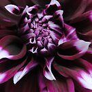 Purple by Sandra Fortier