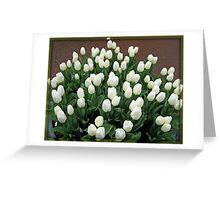 Pristine White Tulips - Keukenhof Gardens Greeting Card