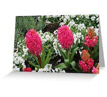 We are the pinkies! Keukenhof Hyacinths Greeting Card
