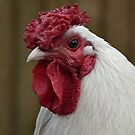 Brenda the Wonder Chicken  by Yampimon