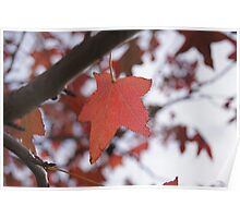Feel Like Autumn Poster