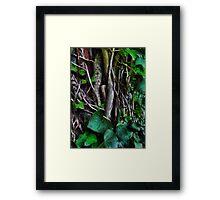In the dark undergrowth Framed Print