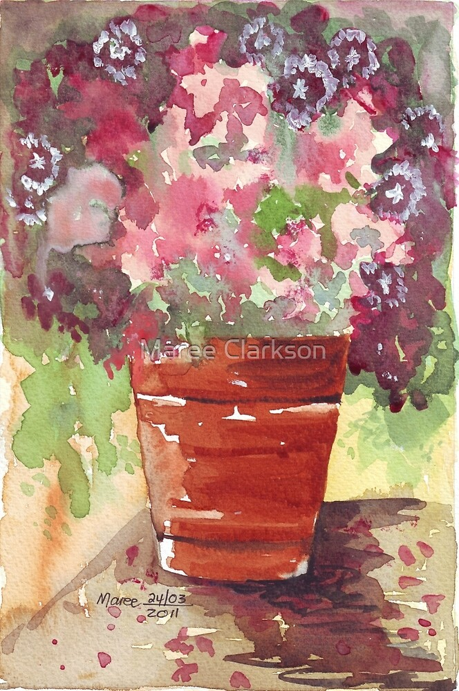 Dianthus in Terracotta Pot by Maree Clarkson