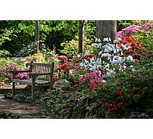 Get A Good Seat Photographic Print