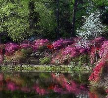 Honor Heights Park Azalea Festival by Carolyn  Fletcher