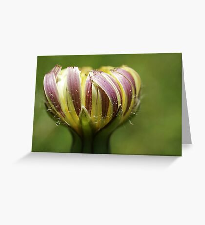 Prickly Goldenfleece Greeting Card