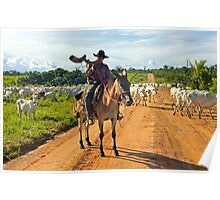 cattle drive in the Brazilian interior  Poster
