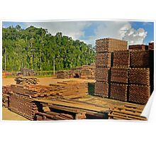 the future of the Amazon Rain Forest 004 Poster