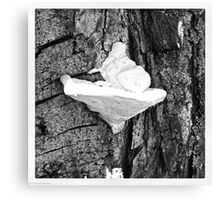 Tree Fungus Canvas Print
