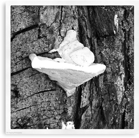 Tree Fungus by Tim Topping