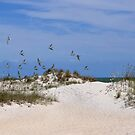 Shorebirds At Huntington Beach State Park by Kathy Baccari