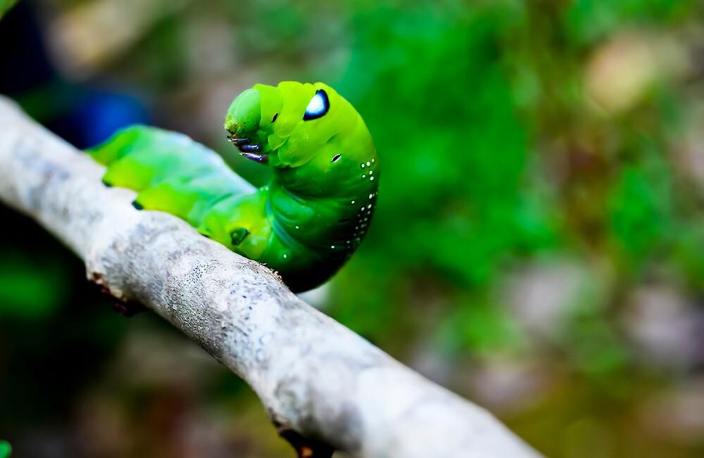 Cute caterpillar by merilfloyd