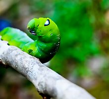 Cute caterpillar by merilfloyd