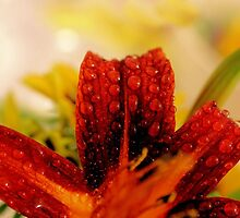 Daylily Tears - Daily Homework - Day 18 - May 25, 2012 by aprilann
