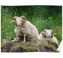 some sheep are more equal than others Poster