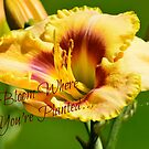 Bloom Where You're Planted... by Carol Clifford
