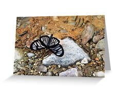 Beauty in the middle of the road Greeting Card