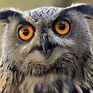 Eurasian Eagle-Owl  by DutchLumix