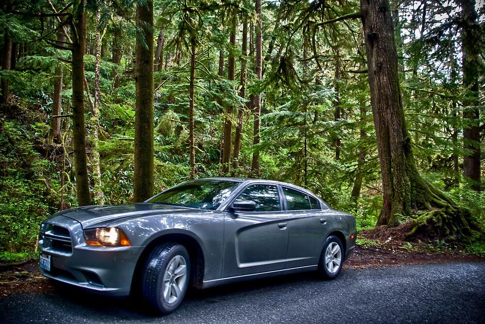 Dodge: Wild by Adam Northam